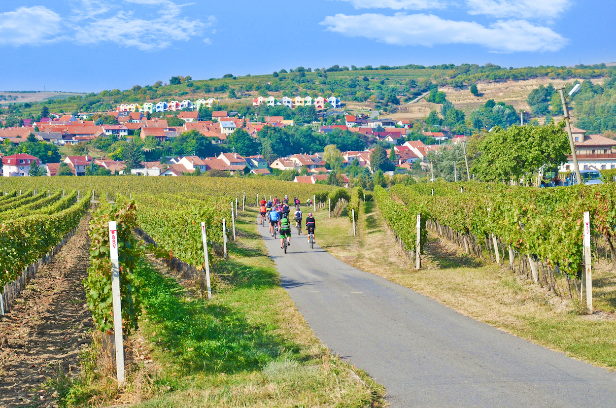 Coastal Vineyard Tour